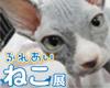 cat2015icon.jpg